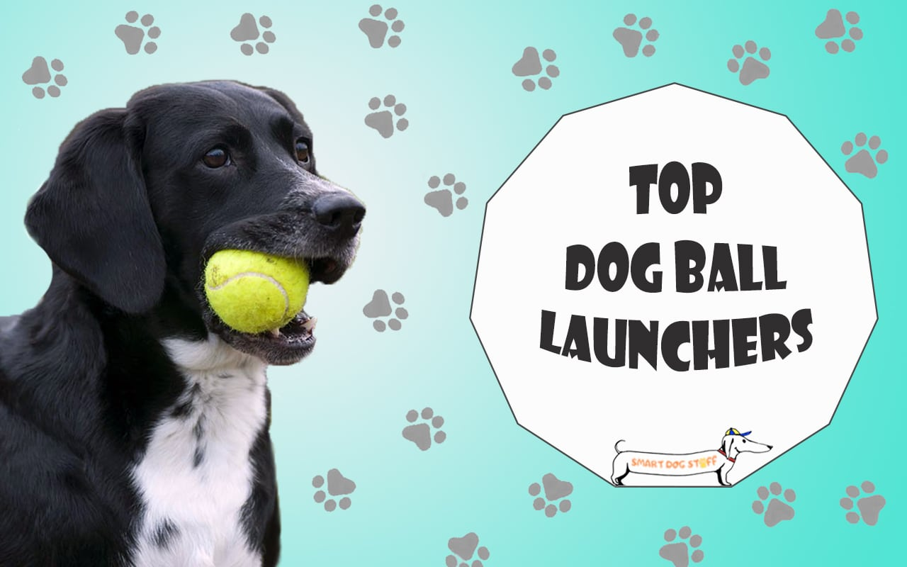 Long Handle Great Fun For Dogs New Dog Ball Launcher  Thrower With Tennis Ball