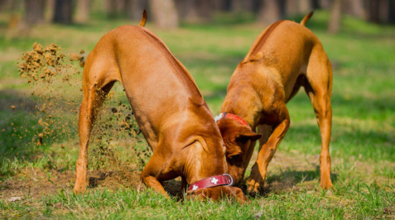 How to Stop Your Dog from Diggin