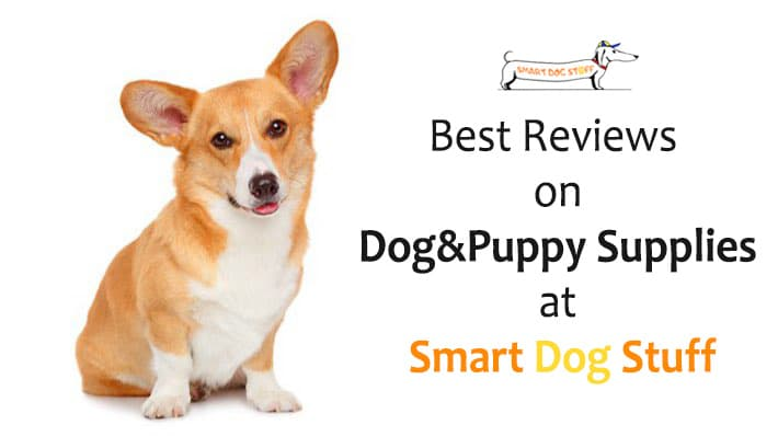 Best Dog and Puppy Supplies at Smart Dog Stuff