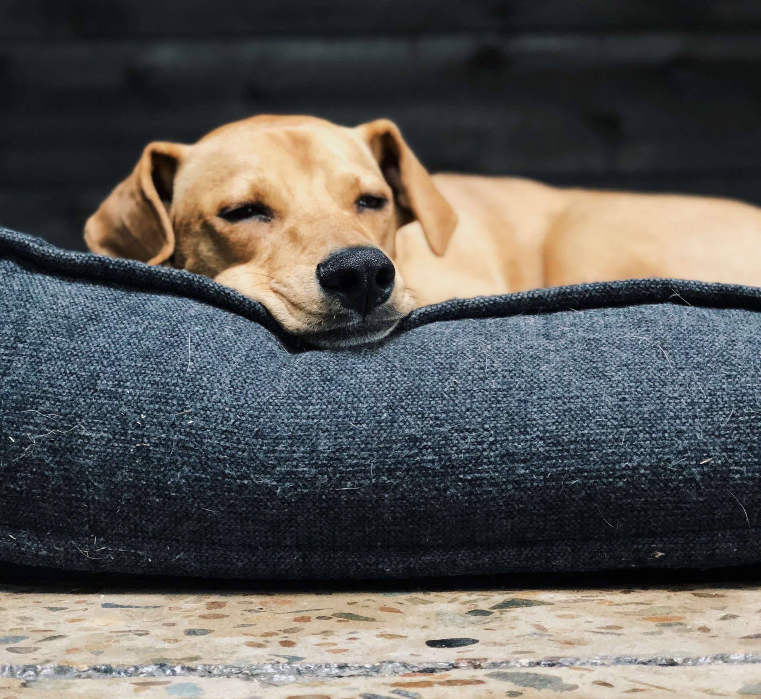 Incredible Best Dog Beds Smart Dog Stuff Uwap Interior Chair Design Uwaporg