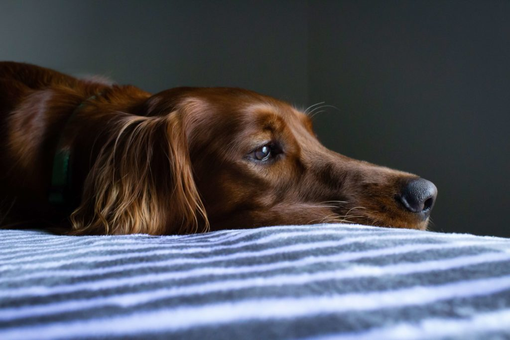 9 Signs Your Dog Is Sick