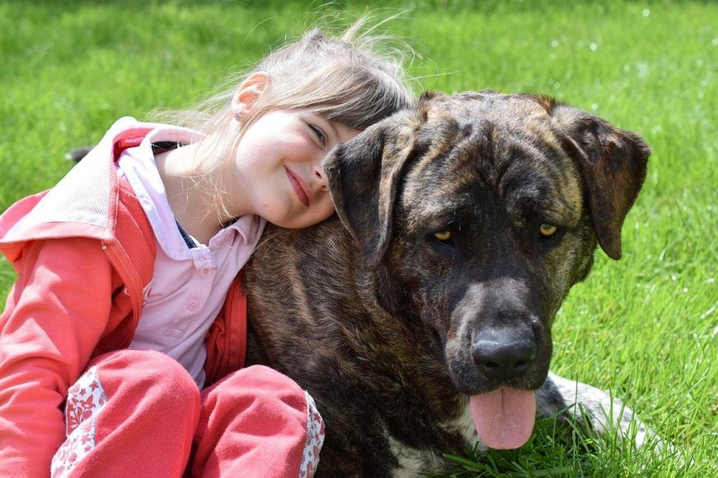 Tips for Choosing the Right Dog Breed for Your Family