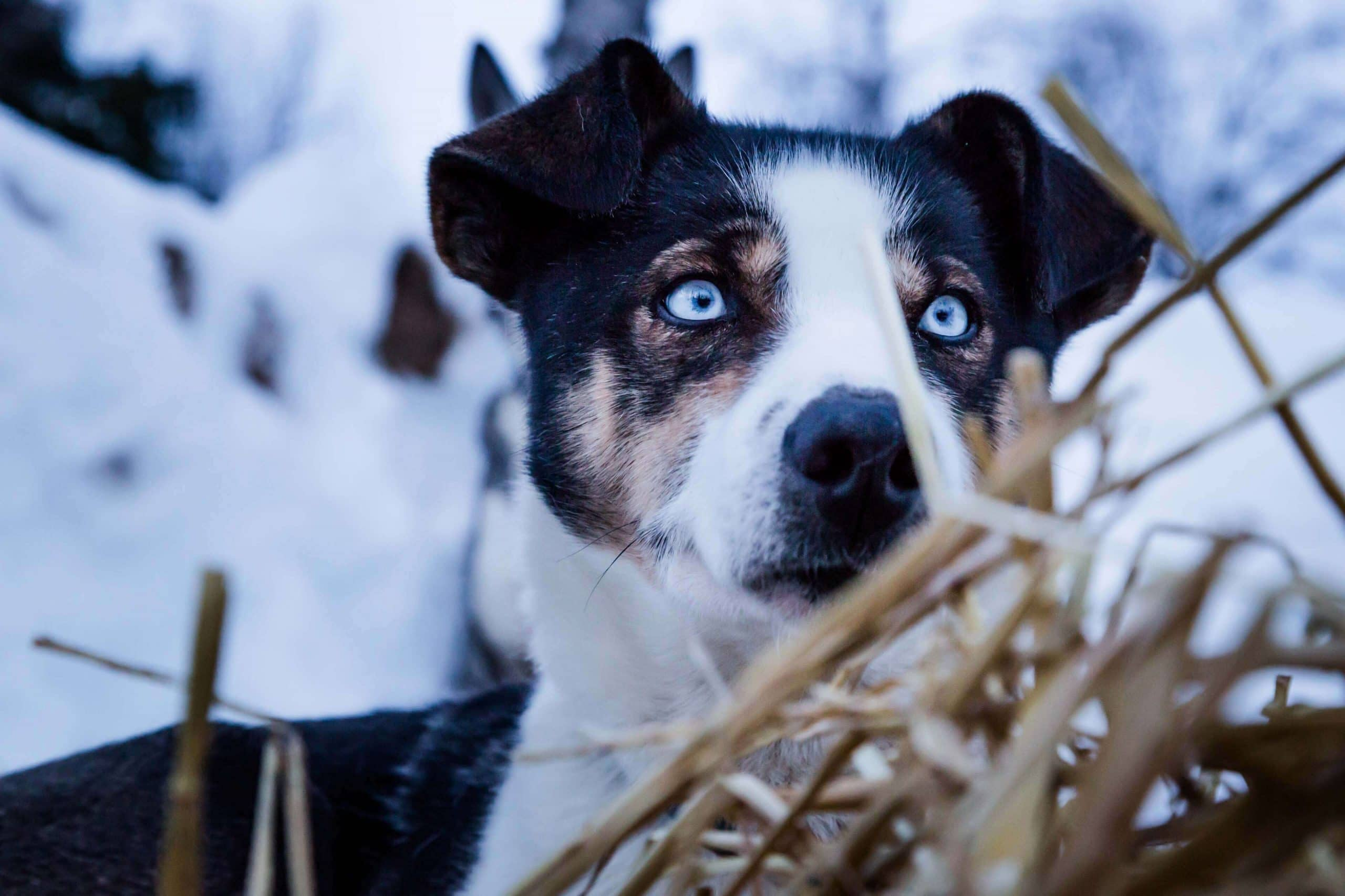 Dog Eye Infection: Reasons, Signs, and Treatment
