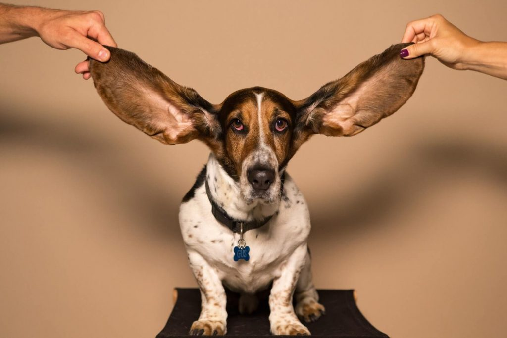 How to Clean Dog's Ears: a Complete Guide