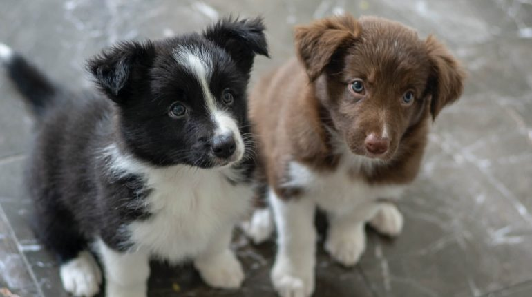 7 Tips for Training a New Puppy
