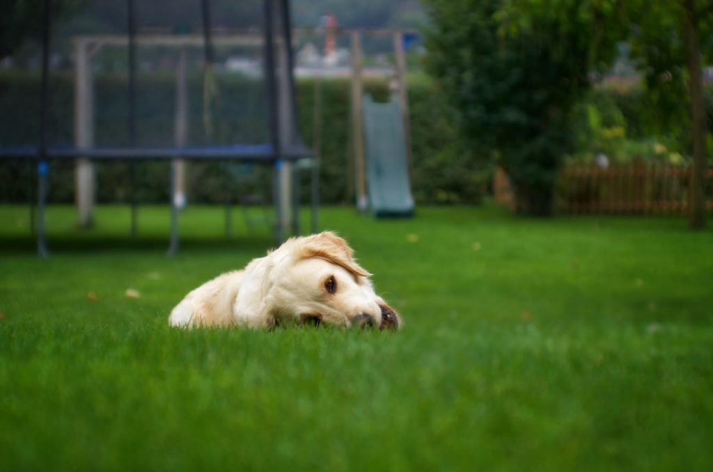 Why Do Dogs Roll in the Grass: 6 Common Reasons