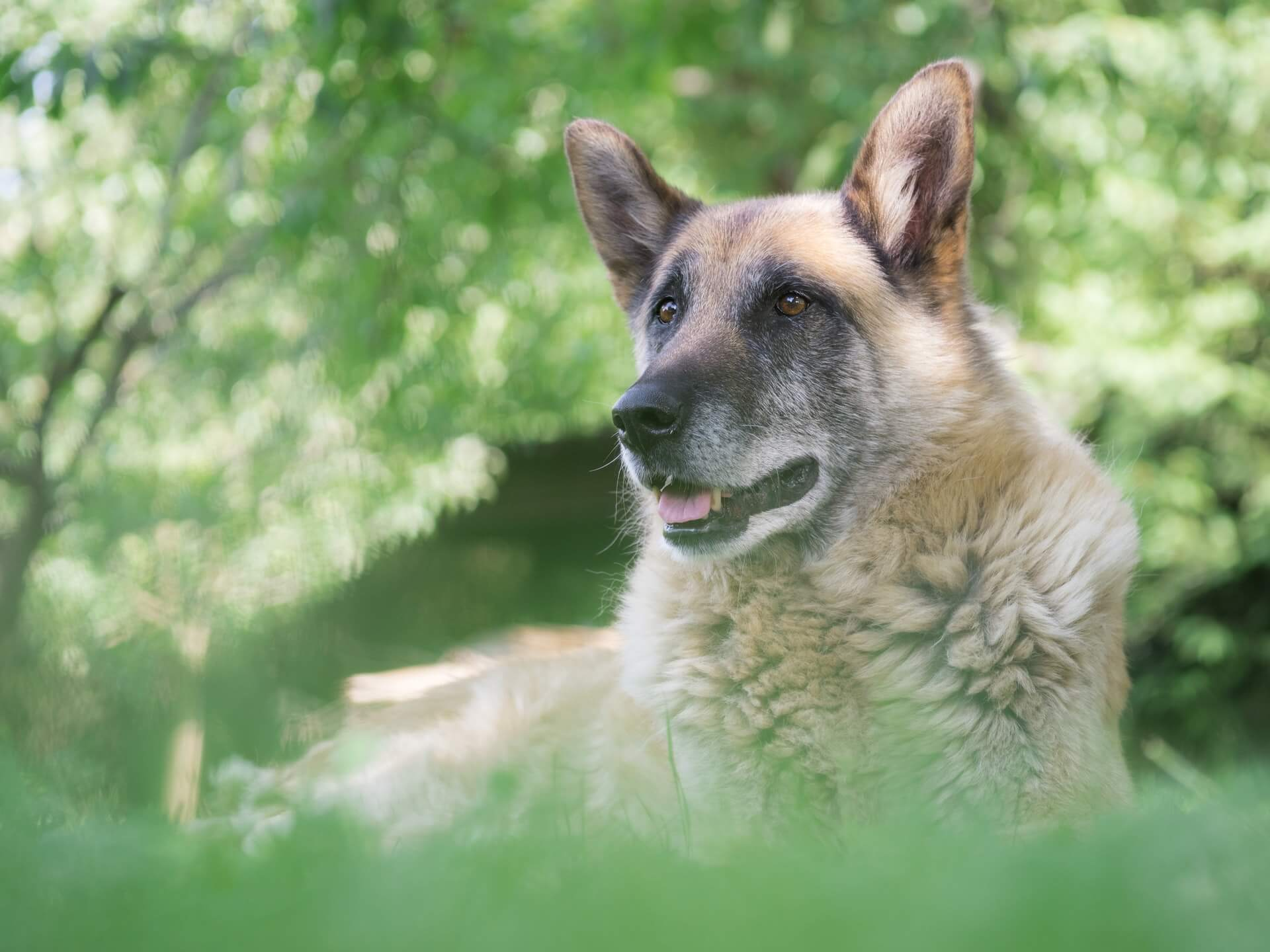 How to Tell How Old a Dog Is: the Surest Ways to Determine the Age of a Canine