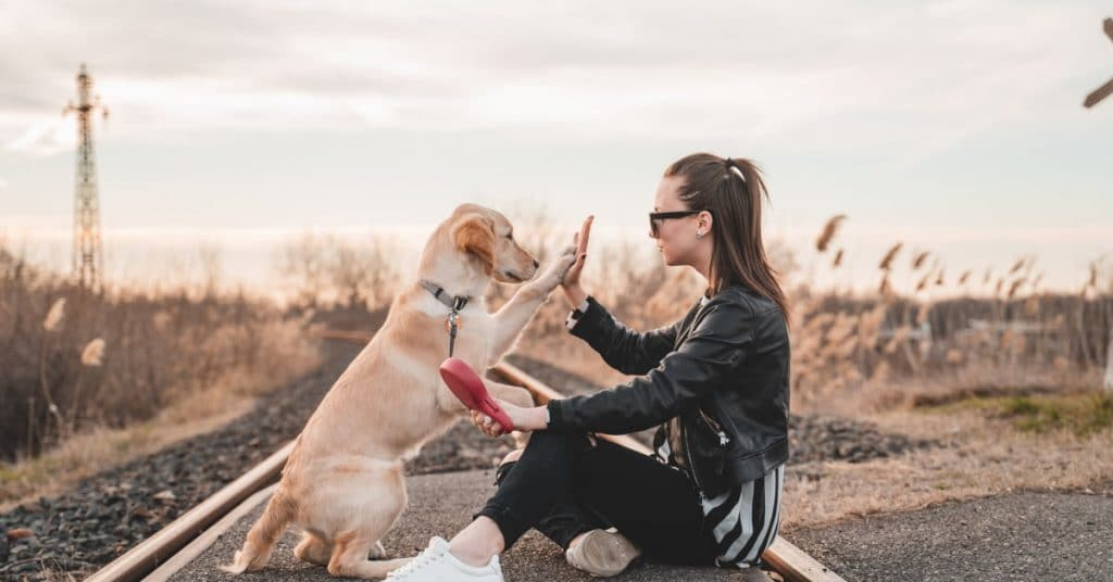 What Is An Emotional Support Dog