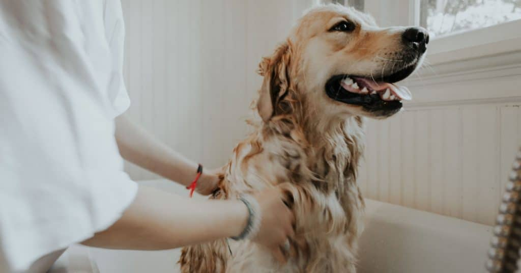 Groom Your Dog the Right Way