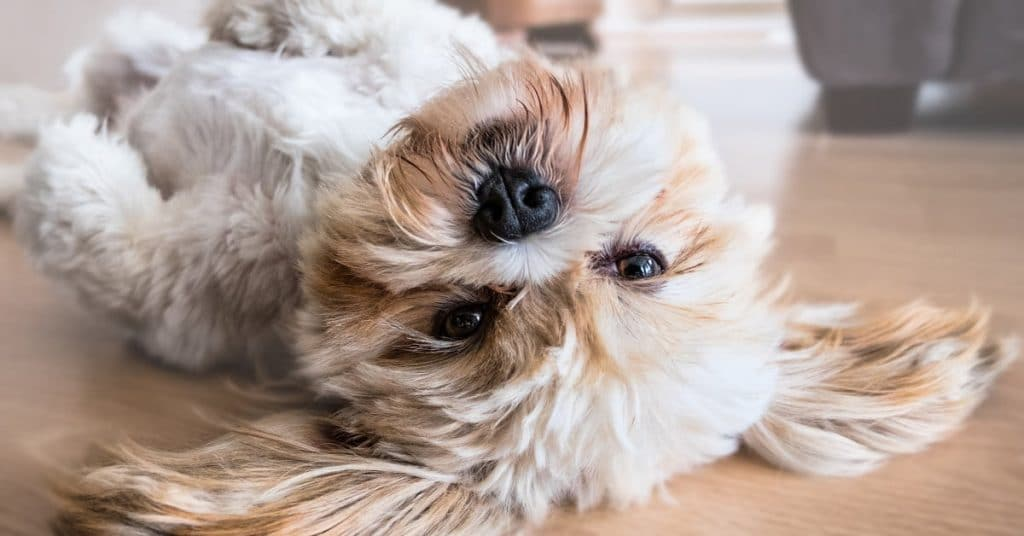 7 Strange Dog Behaviors and What They Mean