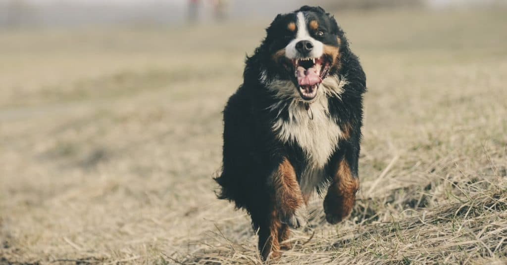 How To Choose Cheap but Good Dog Insurance