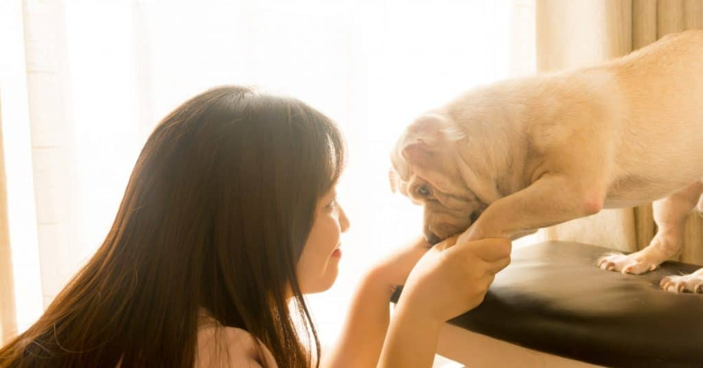 6 Important Pet Care Tips