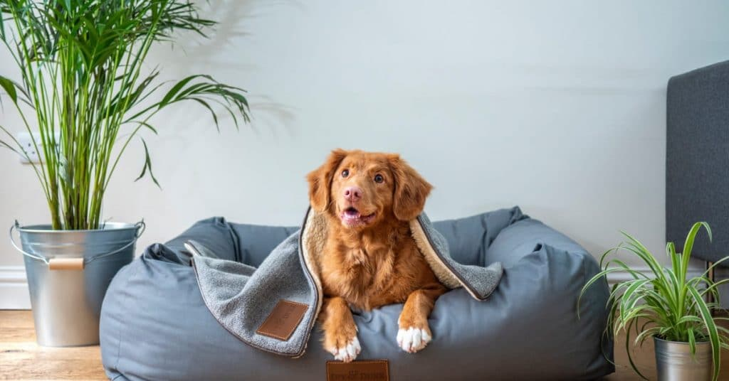 How To Safely Wash And Maintain Your Dog's Toys And Supplies