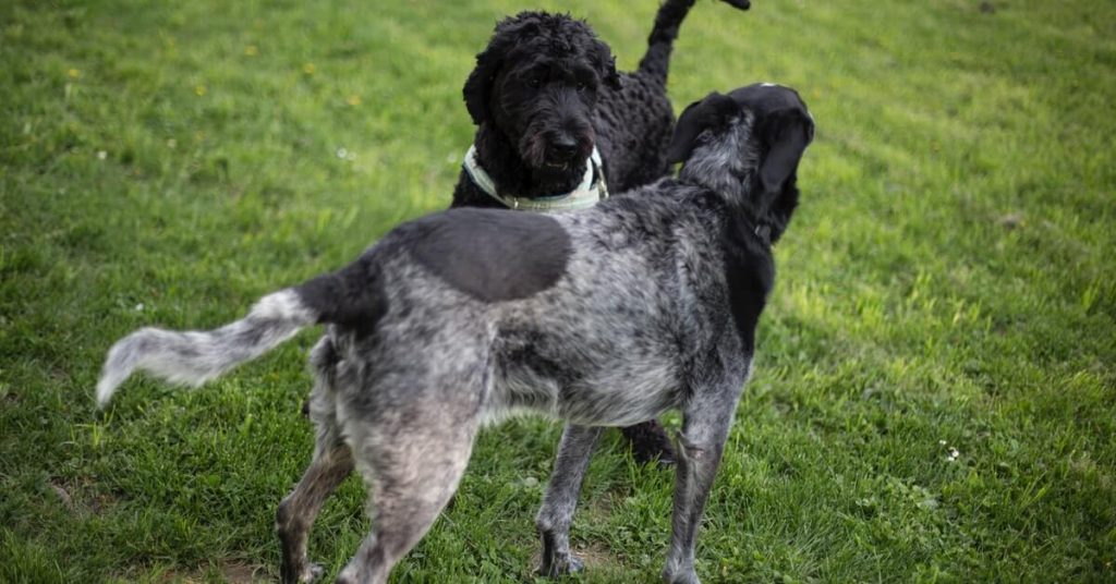 6 Practical Tips for Socializing Your Dog