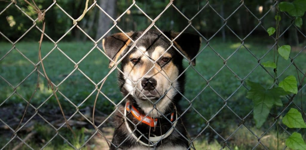 Proven Ways To Keep Your Dog From Escaping The Yard